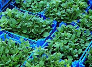 Jak przygotować ziemię w ogrodzie do sadzenia roślin